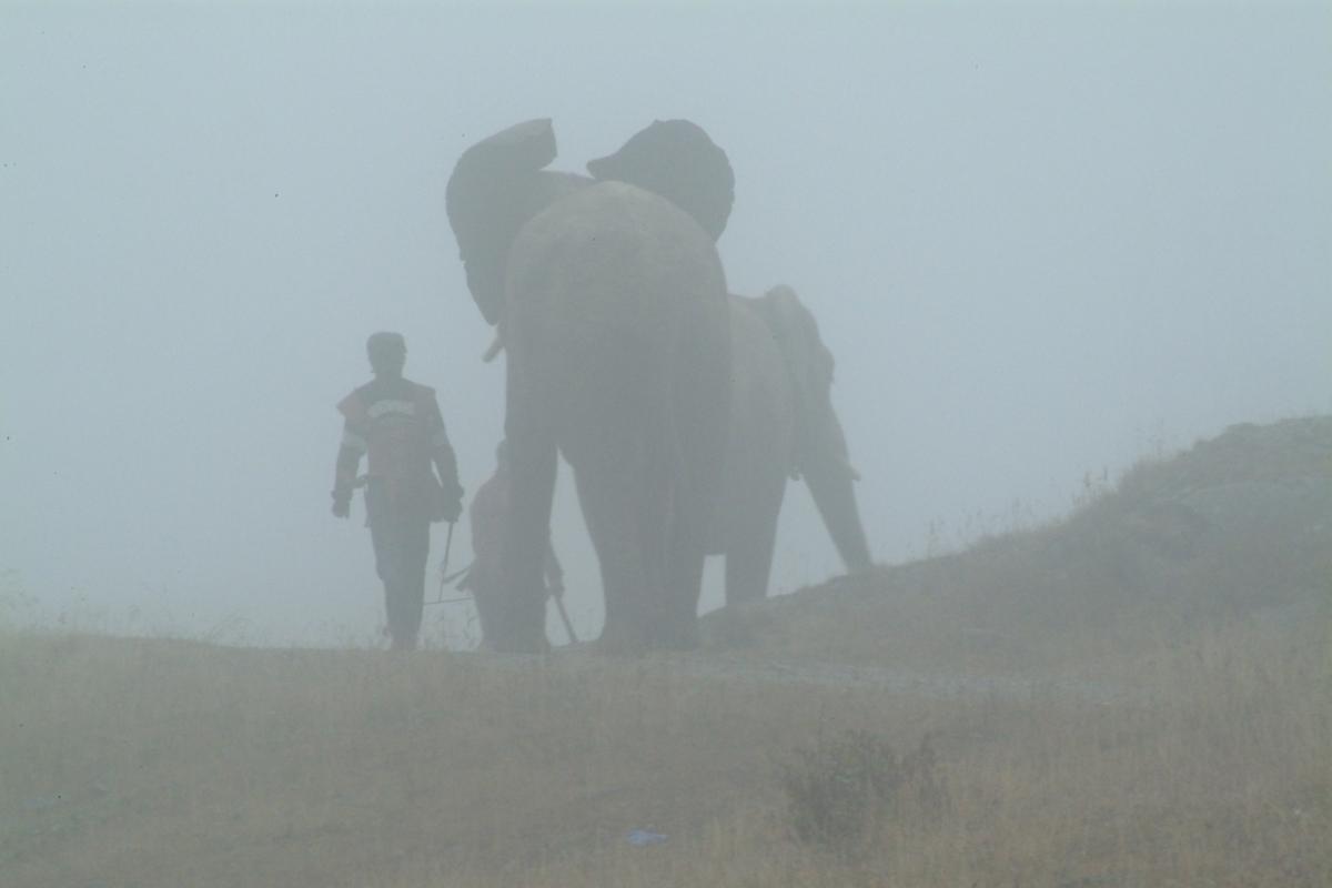"""3 Routen, wie """"Hannibals Elefanten"""" die Alpen überquerten"""
